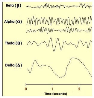 Las ondas cerebrales son un reflejo directo de la función del Sistema Nervioso Central.